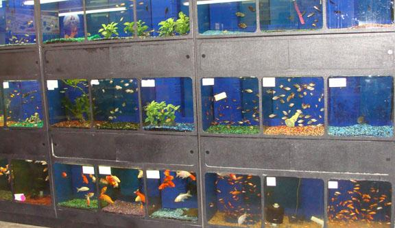 Pets r people too for Fish pet shop